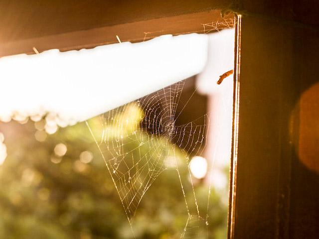removing spider webs