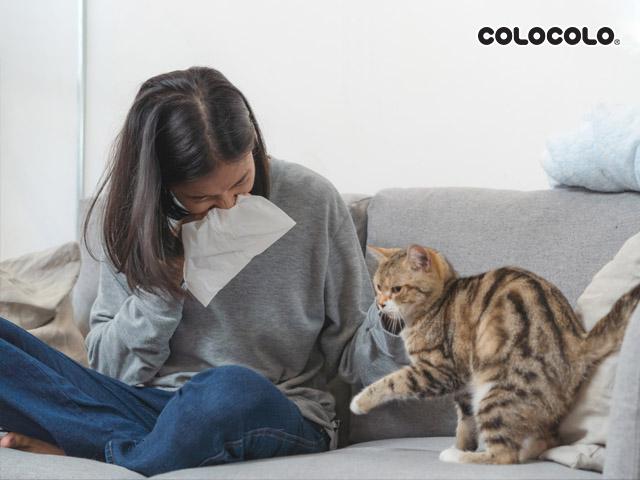Triệu chứng dị ứng lông mèo có thể trở nên trầm trọng hơn nếu bạn ngủ chung với chúng