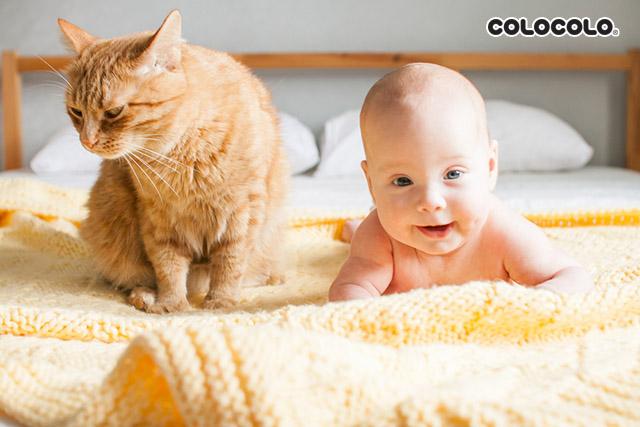 tác hại của lông mèo