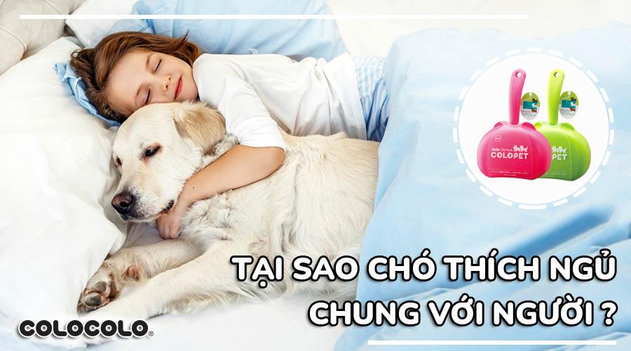 tại sao chó thích ngủ với người