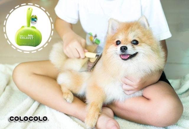 chăm sóc lông chó