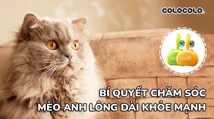 chăm sóc mèo