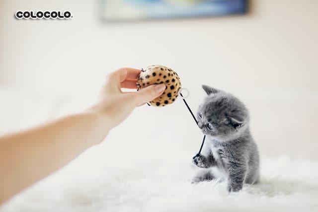 lưu ý khi nuôi mèo