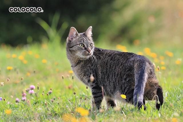 nuôi mèo hoang